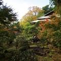 楽寿園も秋色に色付いて
