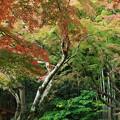 秋色な樹木