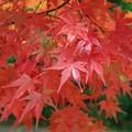 しっとり秋色