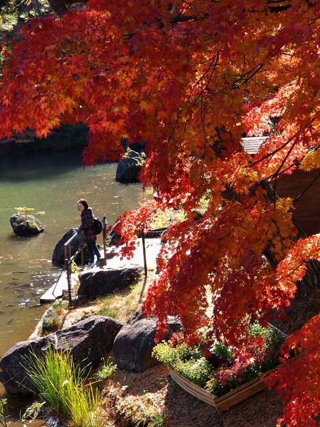 見入る秋、垂れる秋色 *a