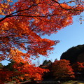 Photos: 晩秋の青空