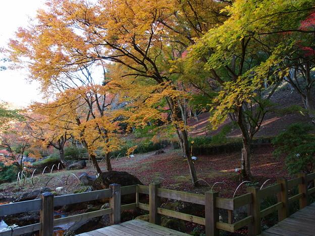 Photos: 秋色黄色