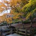 写真: 秋色黄色