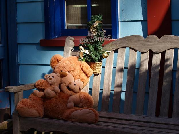 写真: クマさん達のクリスマス *b