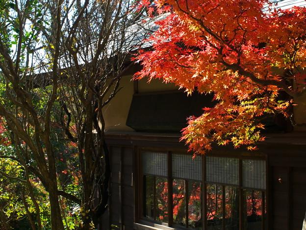 硝子に映える晩秋の色 *b