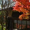 写真: 硝子に映える晩秋の色 *b