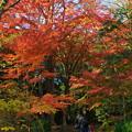 写真: 秋色に覆われた歩道