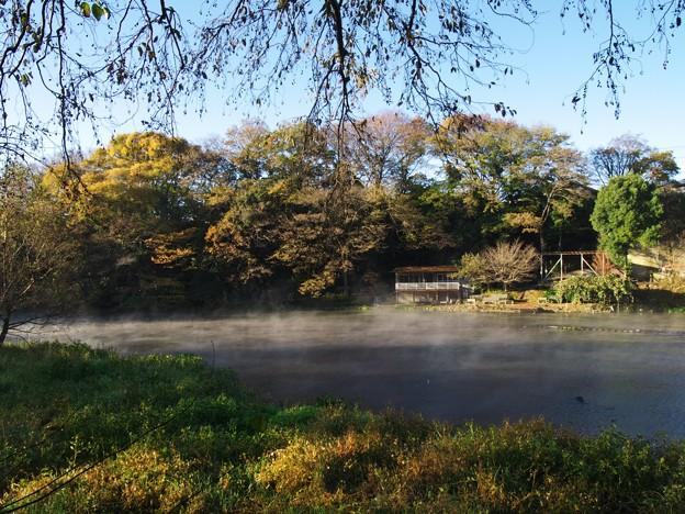 厳寒の朝~柿田川湧水 *b