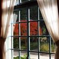 写真: 窓の外の名残秋