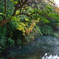 写真: 厳寒な朝の湧水はモヤっと