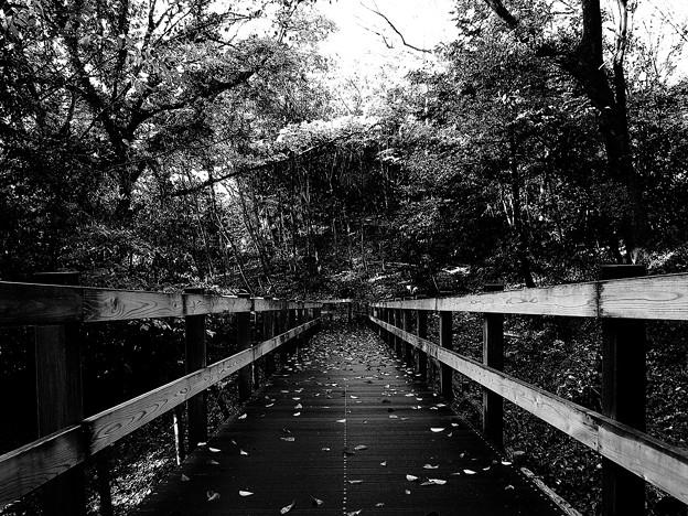 写真: 落ち葉散る遊歩道