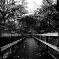 Photos: 落ち葉散る遊歩道