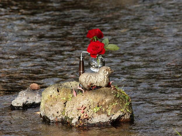 サイフォンに二輪の紅い薔薇を *a
