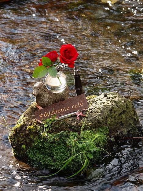 サイフォンに二輪の紅い薔薇を *b
