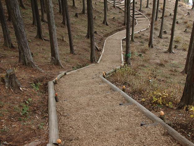 Kicoroの森へ誘い