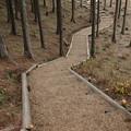 写真: Kicoroの森へ誘い
