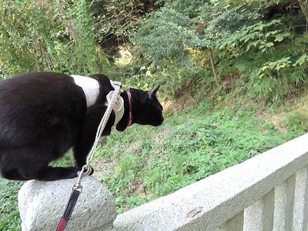 お散歩は神社28