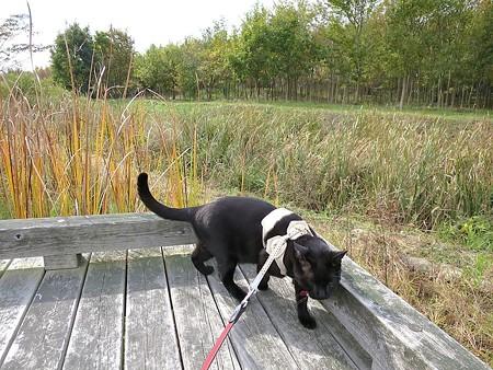 静かに歩く秋散歩9