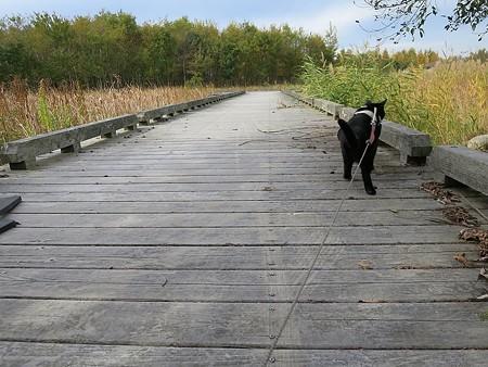 静かに歩く秋散歩11
