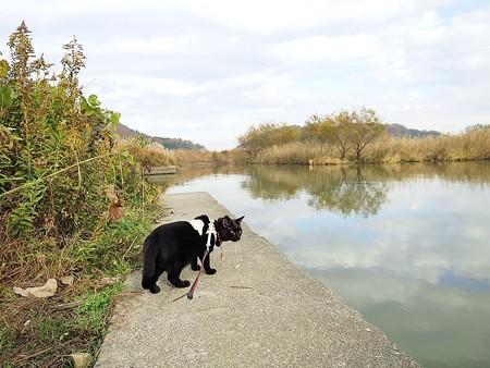 水辺の散歩9