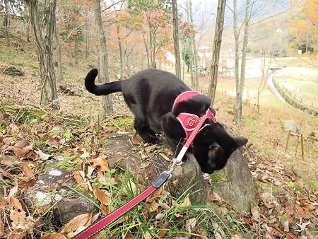 紅葉の終わり_黒猫チャンプ5