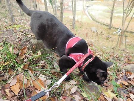 紅葉の終わり_黒猫チャンプ7