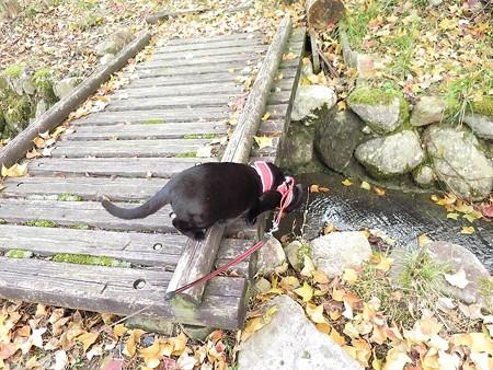 紅葉の終わり_黒猫チャンプ12