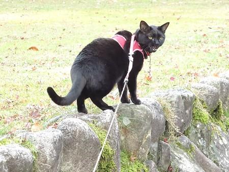 紅葉の終わり_黒猫チャンプ17