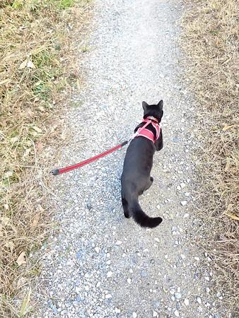 黒猫チャンプ家を建てる音に驚く6