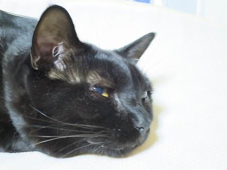 黒猫チャンプの家族1