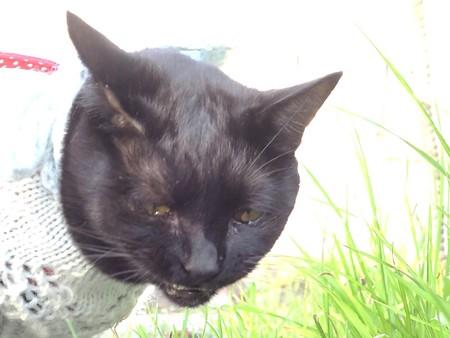 黒猫チャンプの旅は道連れ8