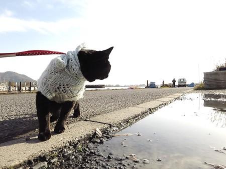 黒猫チャンプの旅は道連れ9