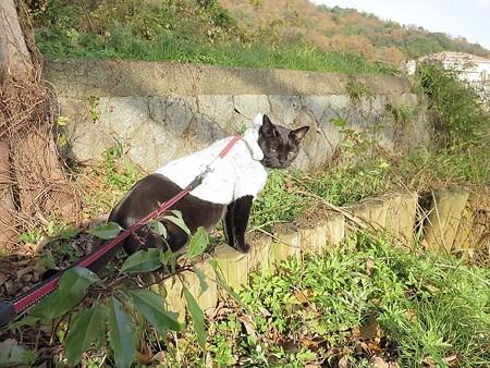 黒猫チャンプの旅は道連れ19
