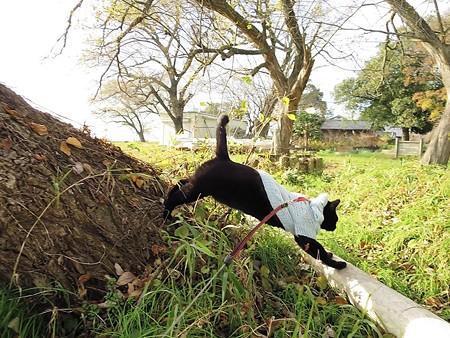 黒猫チャンプの旅は道連れ26