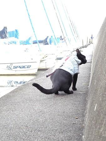黒猫チャンプの旅は道連れ32