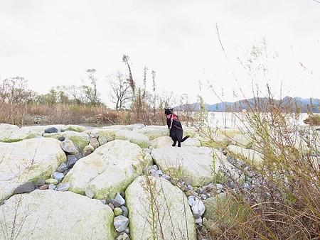 寒い水辺の散歩5