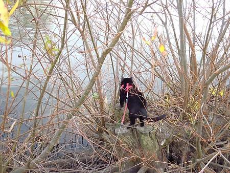 寒い水辺の散歩12