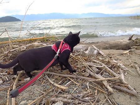 寒い水辺の散歩14