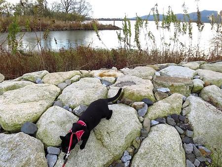 寒い水辺の散歩17