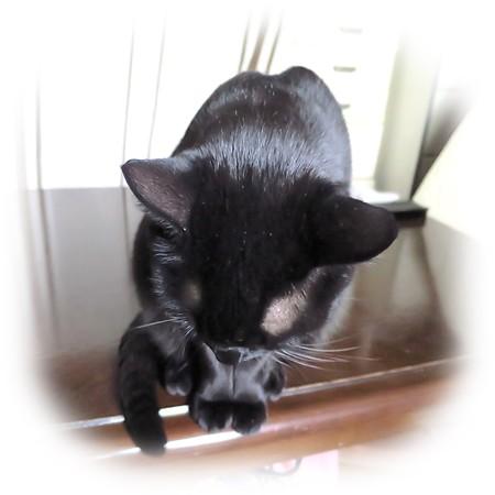 黒猫チャンプ1