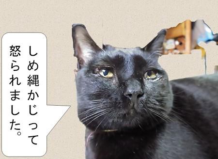 黒猫チャンプ猫の師走3