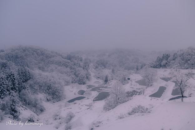 写真: 冬の棚田。#1