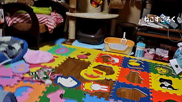 20141223_荒れ果てた子猫部屋