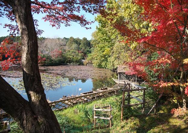 京の紅葉、龍安寺(2)H29,11,17