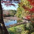 写真: 京の紅葉、龍安寺(2)H29,11,17