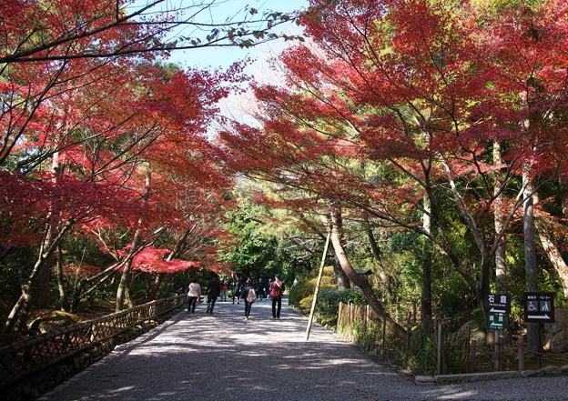 京の紅葉、龍安寺(3)H29,11,17