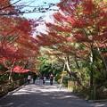 写真: 京の紅葉、龍安寺(3)H29,11,17