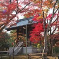 京の紅葉、金閣寺(3)H29,11,17