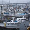 小雪の港(2)H29,12,17