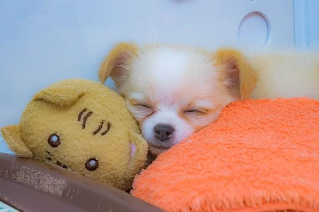写真: Sweet sleep